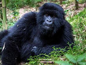 Combined Gorilla Trekking Africa
