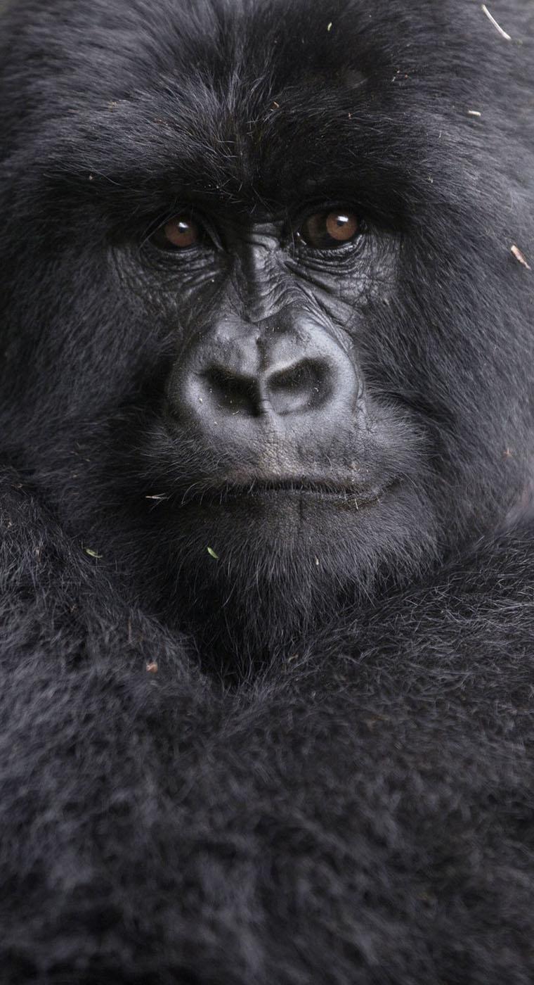 Africa Gorilla Tours