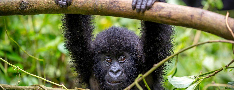 3 Days Uganda Gorilla Safari to Bwindi
