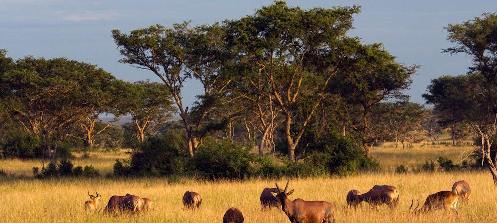 5 Days Gorillas & Wildlife Safari Uganda