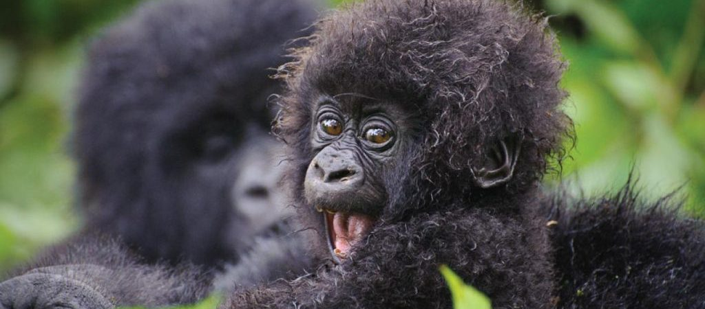 7 Days Rwanda Primates & Wildlife Safari