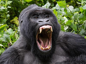 Kigali to Bwindi Gorilla Trekking